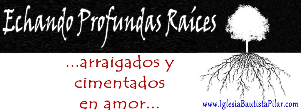 cover photo raices