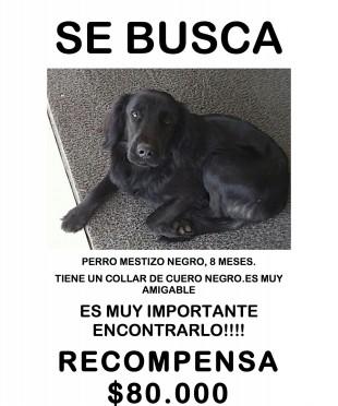 SE_BUSCA_copia